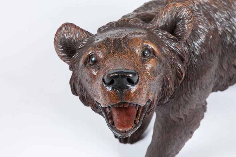A 'Black Forest' Bear In naturalistically carved lindenwood, having glass eyes, head tilted aloft, prowls on all fours.  From the Brienz Area. Brienz, in the Bernese Oberland, Switzerland was remarked upon in Baedeker's Travel Guide, as having a