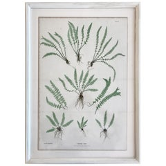 19th Century Bradbury and Evans Nature Printed Fern Print