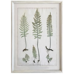 19th Century Bradbury & Evans Nature Printed Fern Print