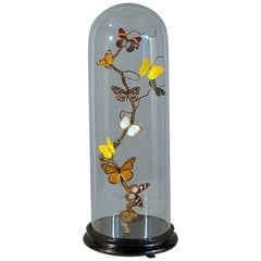 19th Century Butterfly Specimen with Glass Case
