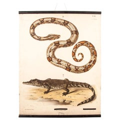 19th Century Educational German Chart, Snake And Crocodile
