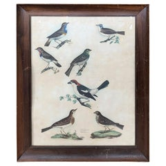 19th Century English Engravings of Bird Species by Prideaux John Selby