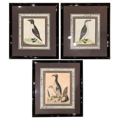 19th Century English Framed Bird Watercolors, Set of Three