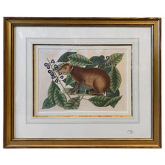 19th Century English Hand-Colored Engraving of Shrew by Mark Catesby, Unsigned