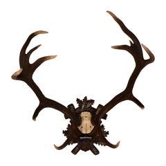 19th Century European Antlers on Plaque