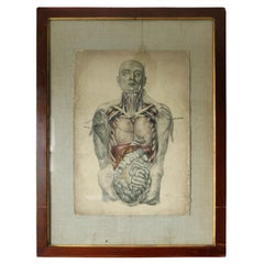 19th Century Framed Anatomical Lithograph