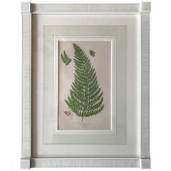 19th Century French Common Prickly Fern Lithograph
