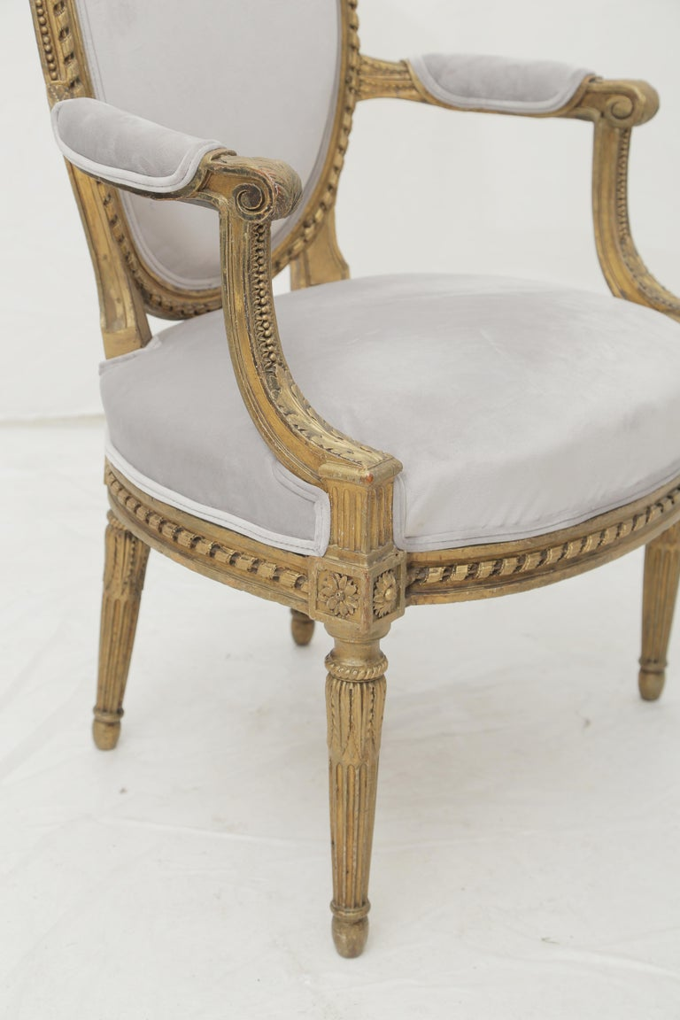 19th Century French Louis XVI Style Carved Giltwood & Pale Grey Suede Armchairs For Sale 1