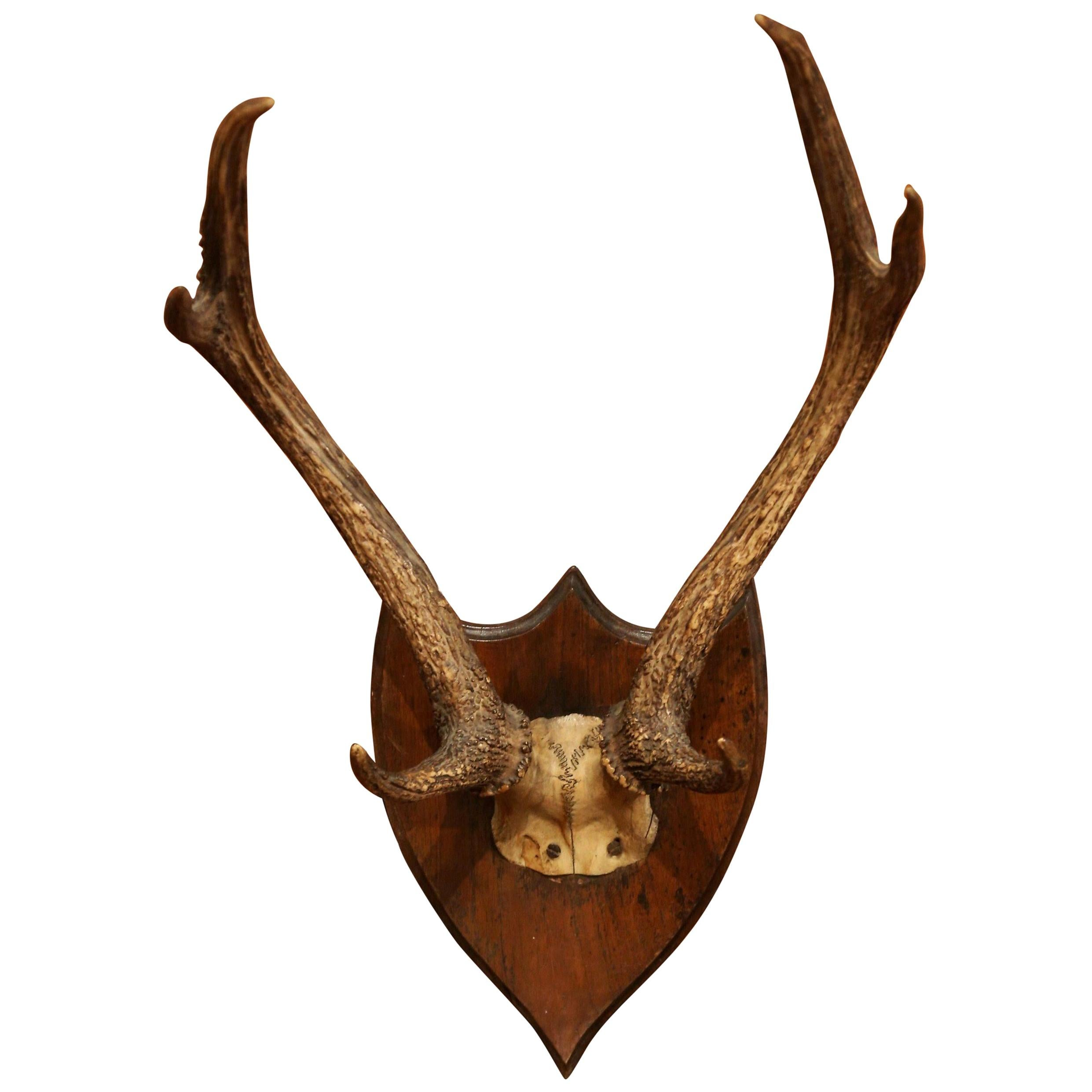 19th Century French Mounted Deer Antler Trophy on Carved Walnut Plaque