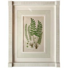 19th Century French Sea Spleenwort Fern Lithograph