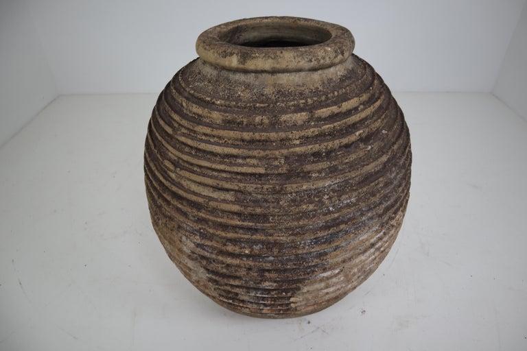 19th Century Greek 'King-Size' Ribbed Olive Jar with Dark Lichen Patination 5