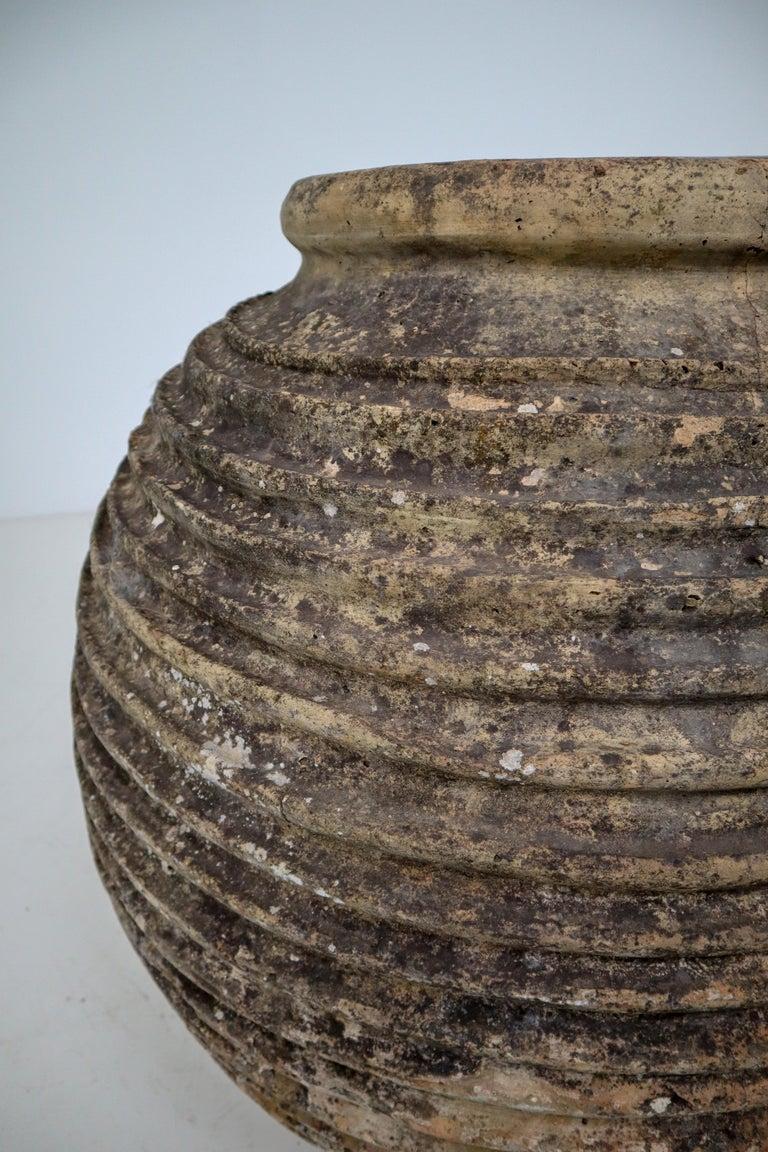19th Century Greek 'King-Size' Ribbed Olive Jar with Dark Lichen Patination 3