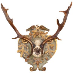 19th Century Habsburg Fallow Hunt Trophy with Original Wappen from Austria