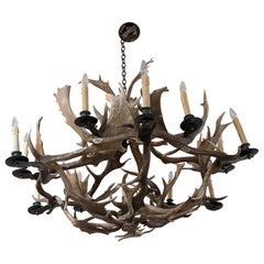 19th Century Horns Chandelier from North America