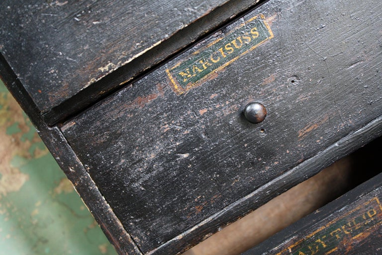 19th Century Horticulturalist Merchants Bank of Seed Shop Drawers For Sale 4