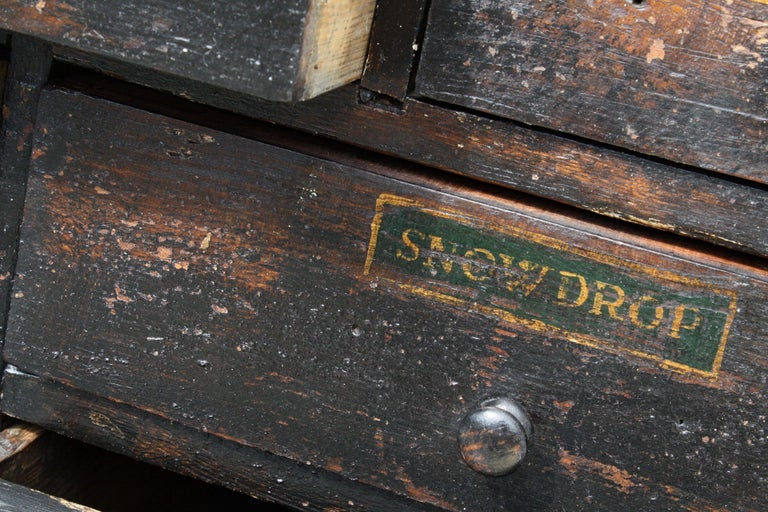 19th Century Horticulturalist Merchants Bank of Seed Shop Drawers For Sale 12
