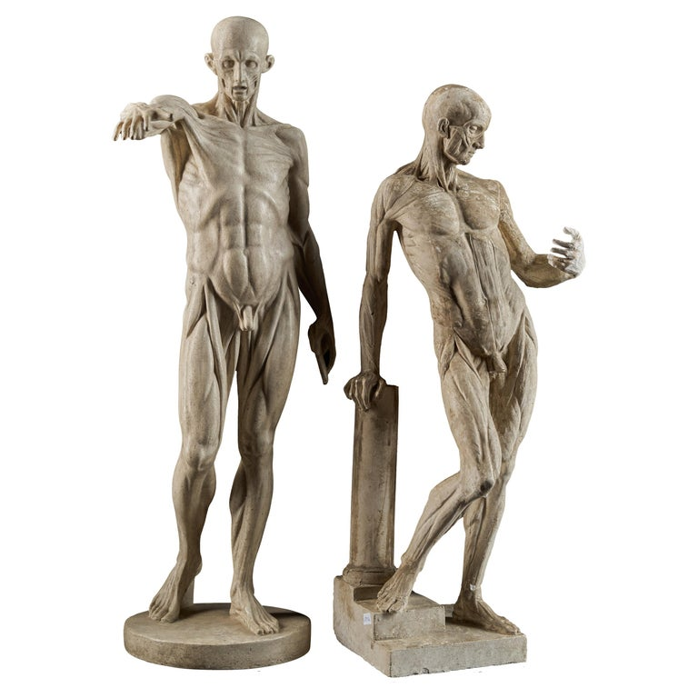 19th Century, Italian School, Two Anatomical Flayed Figures in Plaster For Sale