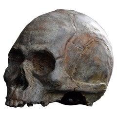 19th Century Life-Size Terracotta Skull