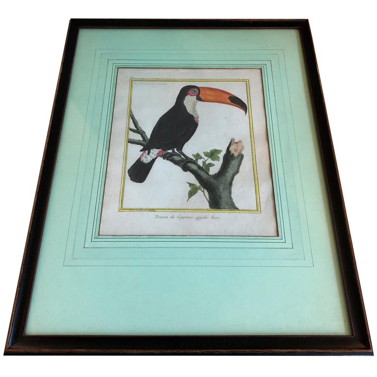 19th century martinet bird engravings with later hand coloring in black painted frames.