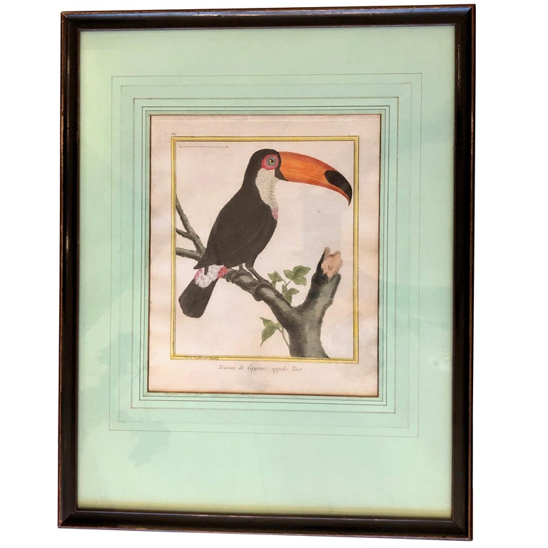 19th Century Martinet Bird Engravings For Sale