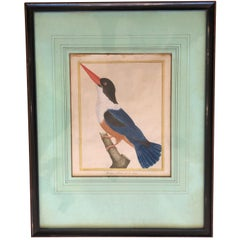 19th Century Martinet Bird Engravings
