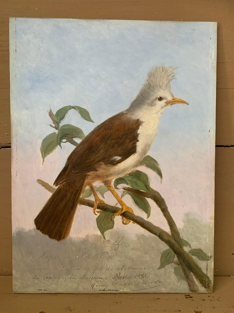 19th Century Oil Painting Hoepoe Bird For Sale 4