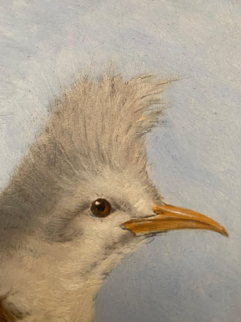 French 19th Century Oil Painting Hoepoe Bird For Sale