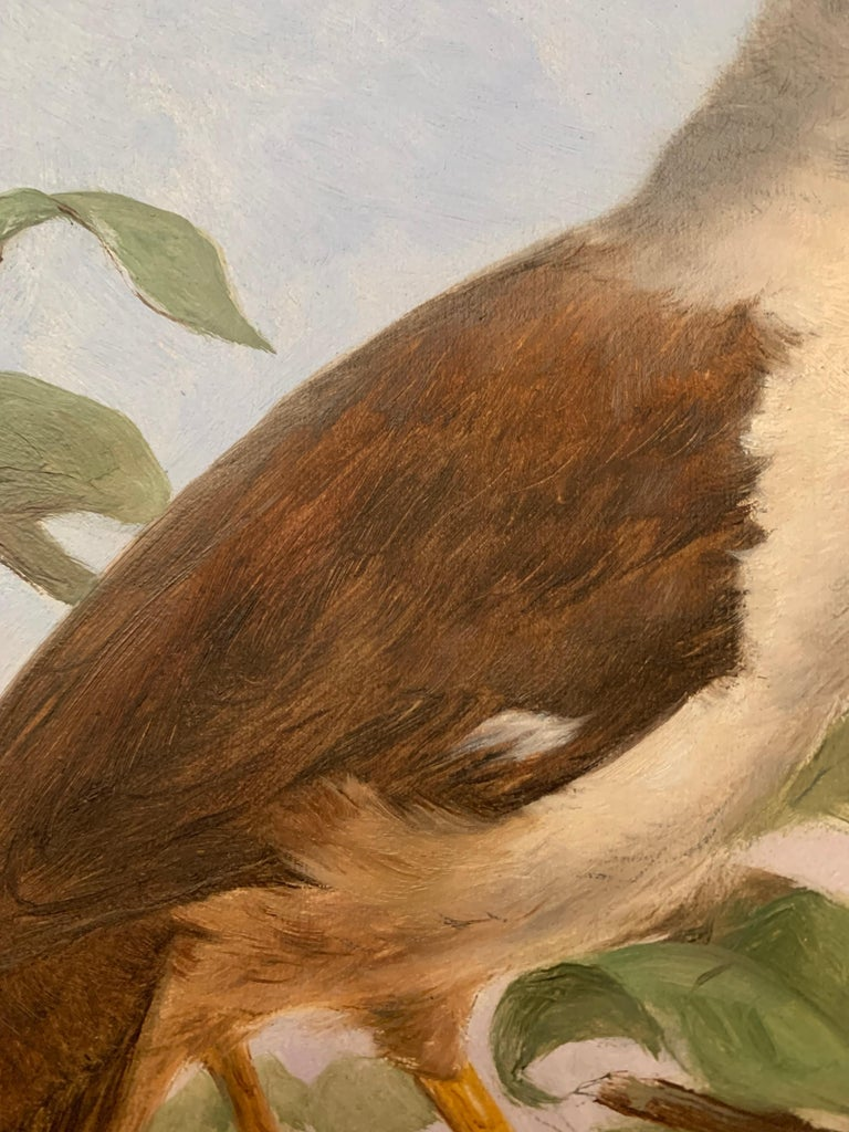 Painted 19th Century Oil Painting Hoepoe Bird For Sale