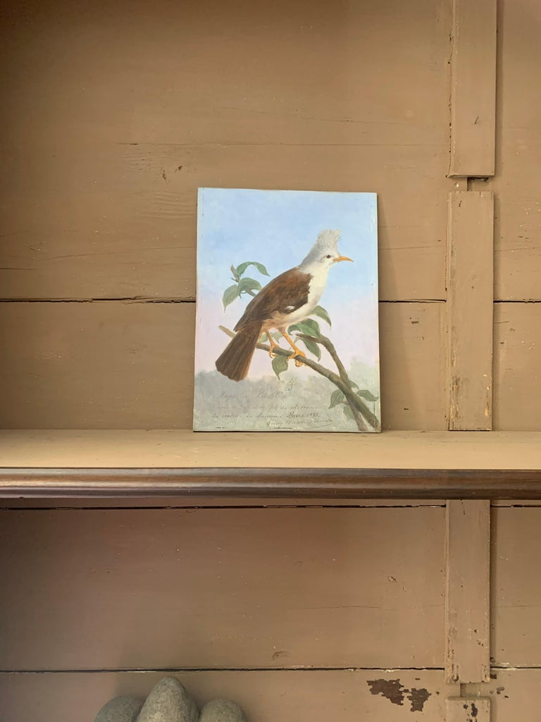 19th Century Oil Painting Hoepoe Bird For Sale 2