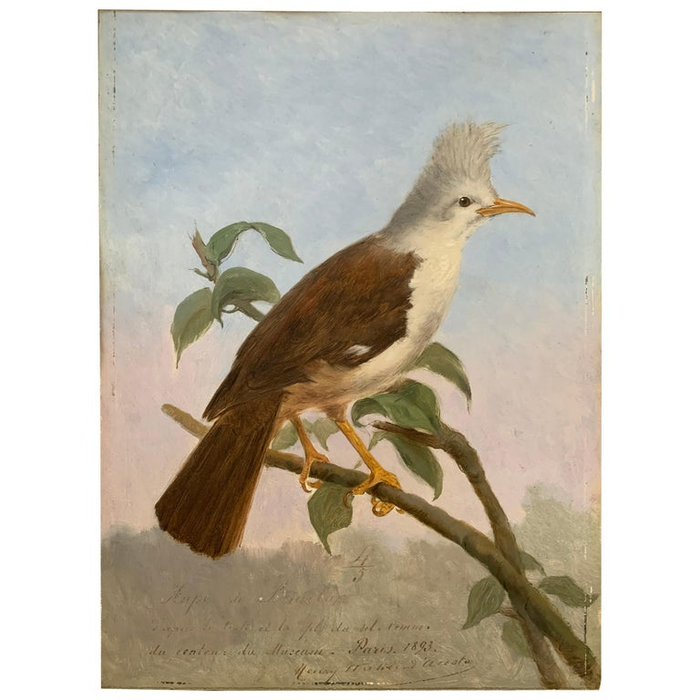 19th Century Oil Painting Hoepoe Bird For Sale
