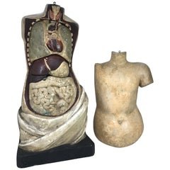 19th Century Plaster Anatomy Teaching Model Torso with Removable Organs