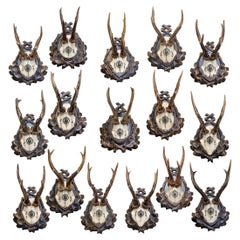 19th Century Spanish Habsburg Roe Trophies on Hand Carved Black Forest Plaques