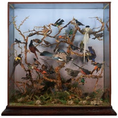 "19th Century Taxidermy Ornithological Showcase ""Paradise"" by Roland Ward"