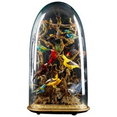 19th Century, United Kingdom, Victorian Dome Filled with 15 Exotic Birds