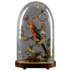 19th Century, United Kingdom, Victorian Dome Filled with 19 Exotic Birds
