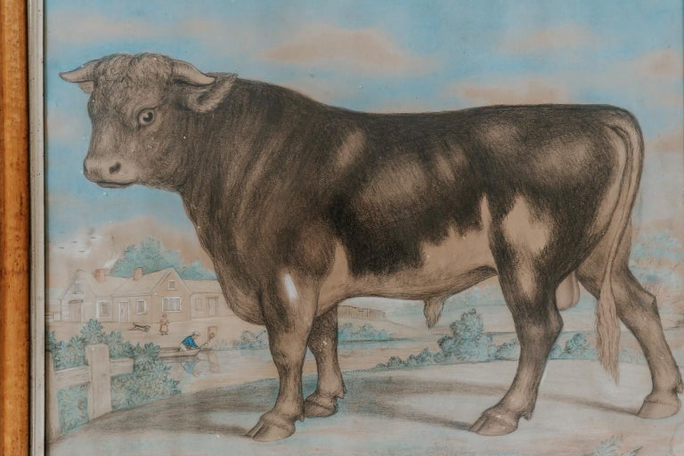 Charming and naive 19th century watercolor of a bull in its original bird's-eye maple frame.