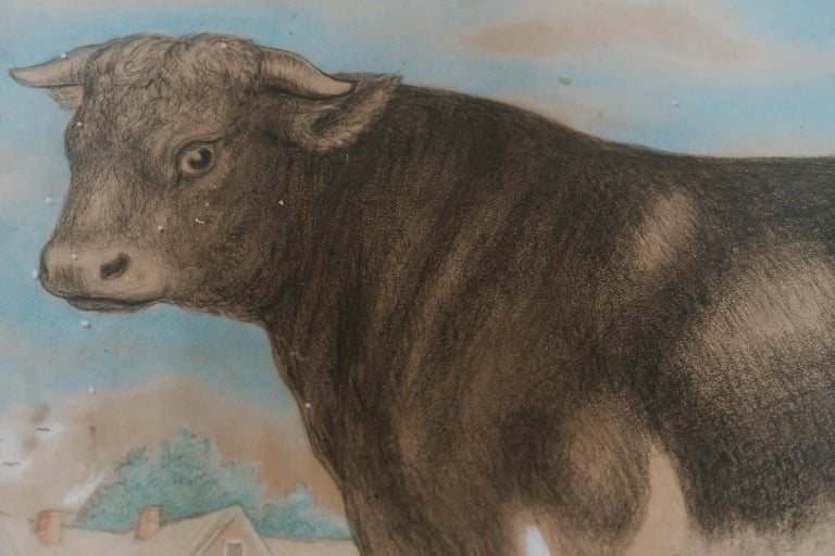 British 19th Century Watercolor of a Bull For Sale