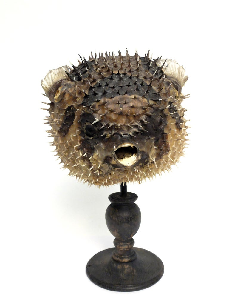 19th Century Wunderkammer Marine Natural Taxodermie Specimen of a Porcupine Fish For Sale 1