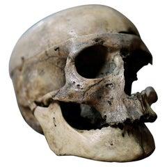 19thC Human Skull Inscribed for Phrenological Demonstration
