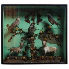 19th Century Pair of Miniature Dogs with Ephemera Photographs & X-Rays Curio