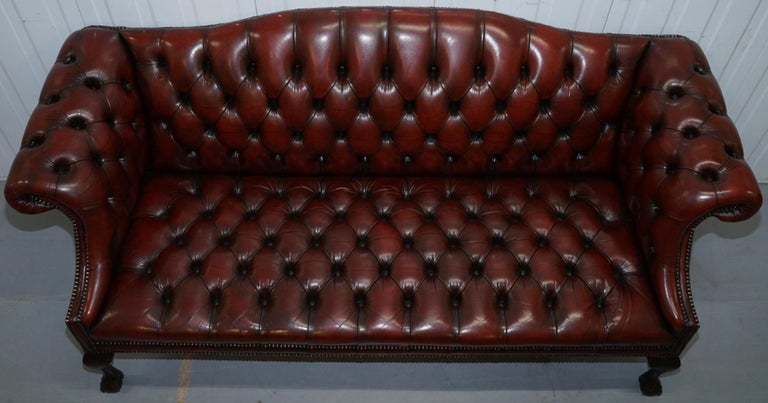 20th Century 2 and 3 Seat Pair of Claw & Ball Feet Restored Brown Leather Chesterfield Sofas For Sale