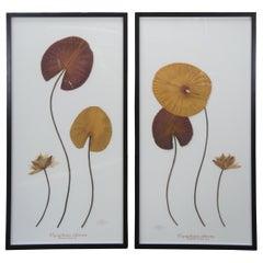 2 Becky Davis Botanicals Fragrant Water Lily Leaf Nymphaea Odorata Floral