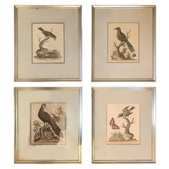 2 Pairs of 18th Century George Edwards Engravings
