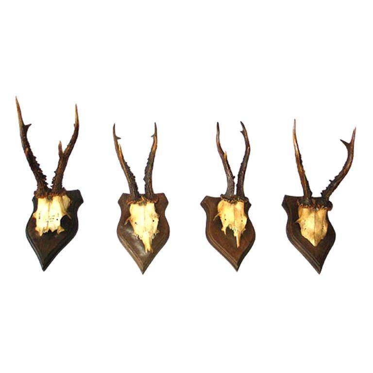 20 French Alpine Mounted Deer Antler / Horns