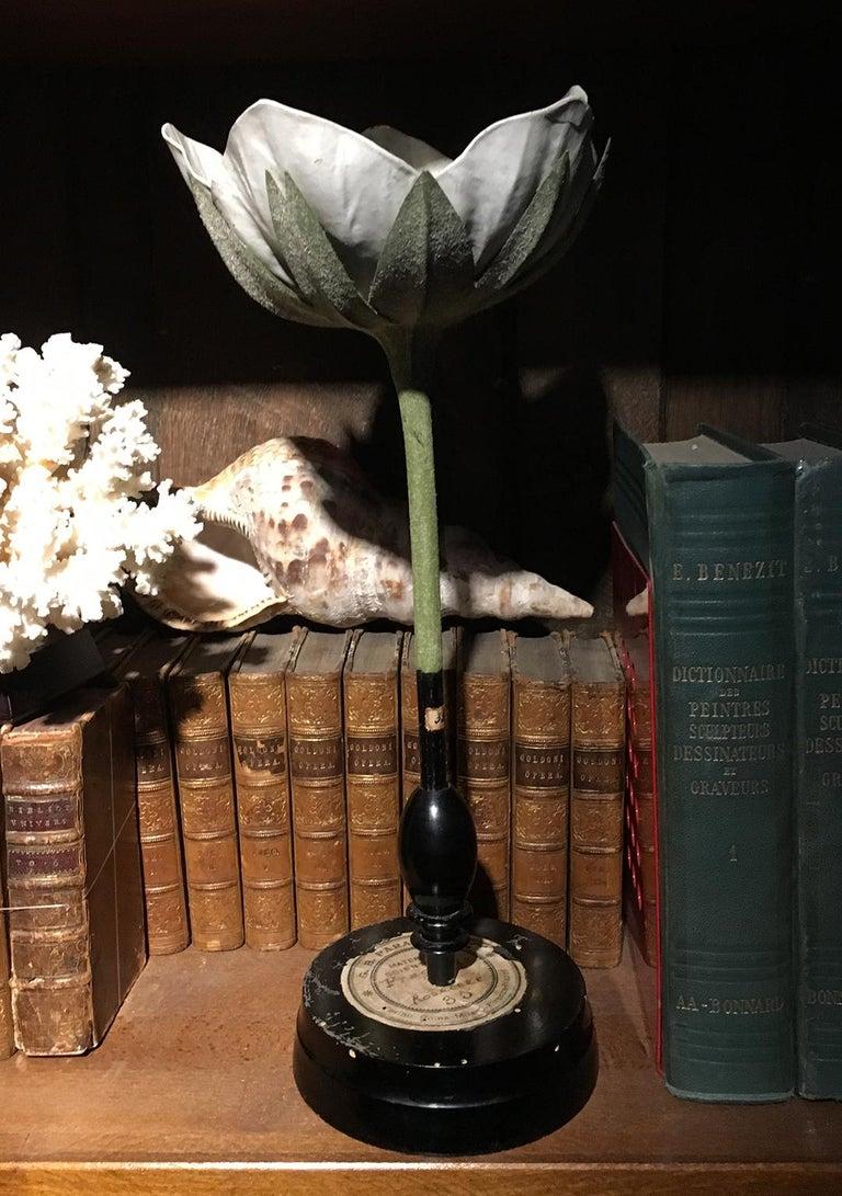 20th Century Italian Botanical Model, circa 1920 For Sale 7