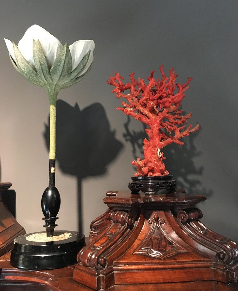 20th Century Italian Botanical Model, circa 1920 For Sale 9