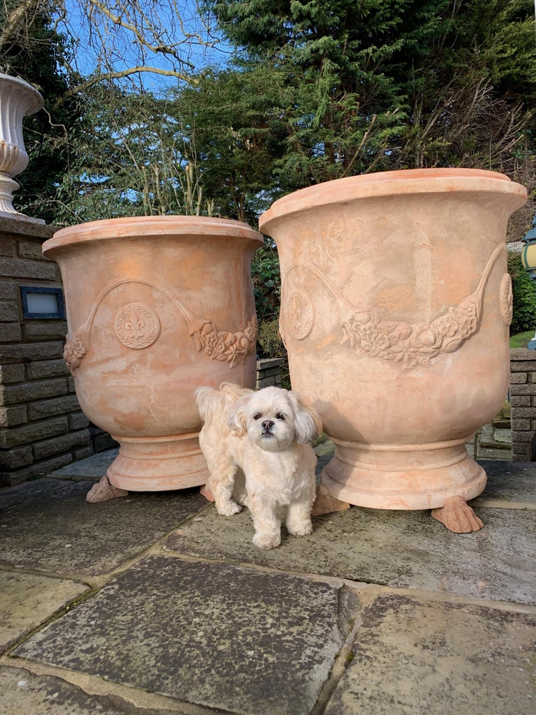 A pair of 20th century large handmade terracotta pots. The very best handmade terracotta pots from Tuscany. Vaso festonato. Superb pots. These are big and handmade.  The most famous kind of Tuscan terracotta is produced in Impruneta, an ancient