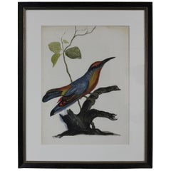20th Century Vintage Woodpecker Bird Colorful Watercolor Painting Framed