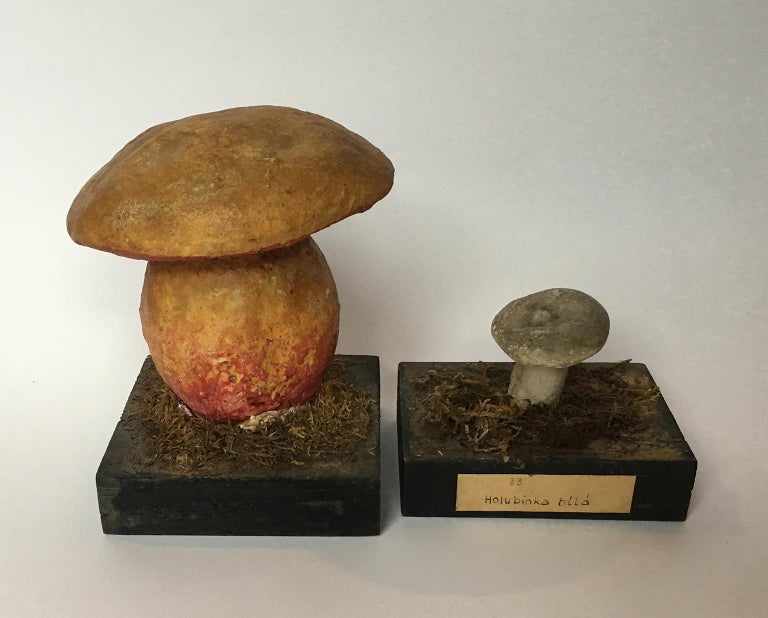 20th Century Wood and Painted Plaster Czech Mushroom Botanical Models circa 1920 For Sale 4