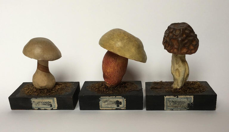 20th Century Wood and Painted Plaster Czech Mushroom Botanical Models circa 1920 For Sale 5